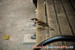 Klupe poznatih ličnosti u parku Vrnjačke Banje - Vrnjačka Banja